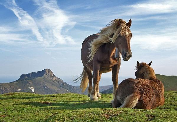پیشینه ی اسب های اصیل ایرانی