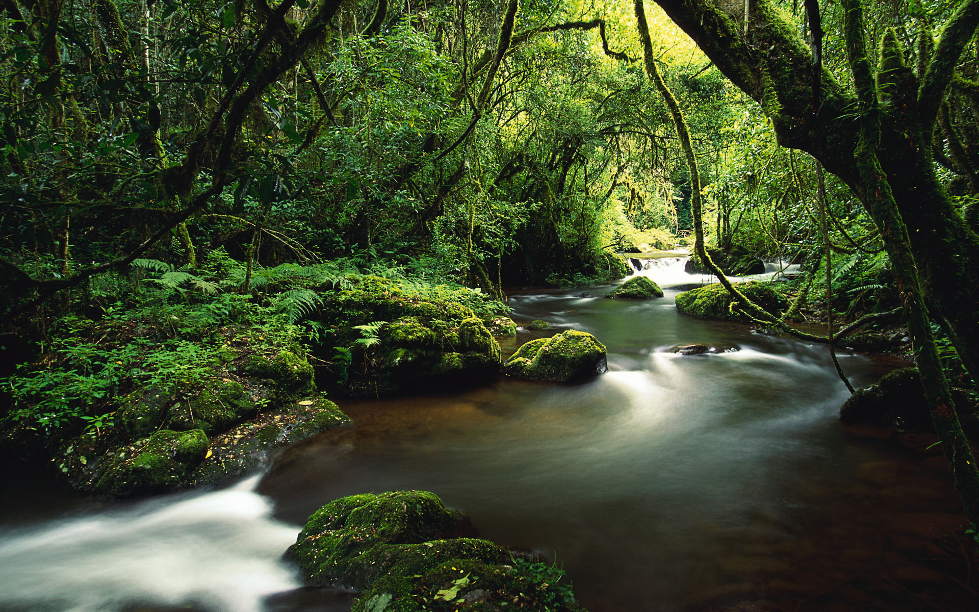 Stream Running Through a Forest Near Sabie, Mpumalanga